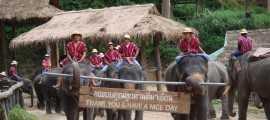 เที่ยวปางช้างแม่สา ดูโชว์ช้างแสนรู้ ชมฟาร์มกล้วยไม้แม่ริม เชียงใหม่